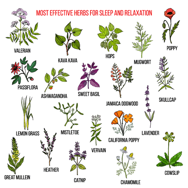 Illustration of most effective herbs for sleep and relaxation.